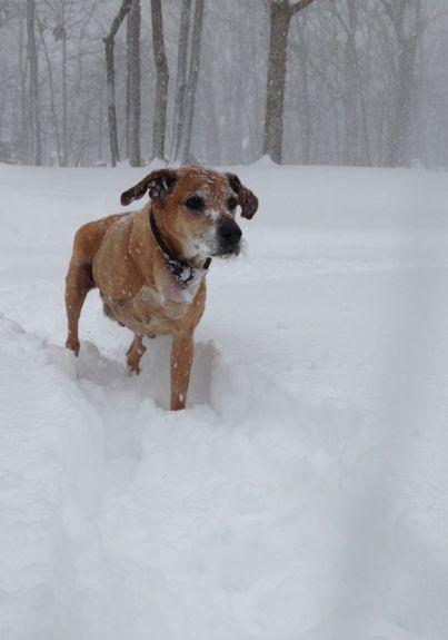 Buddy the snow dog. Tripaw snowdoggie.